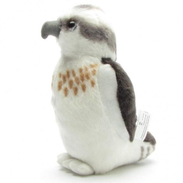 Fischadler - Seeadler